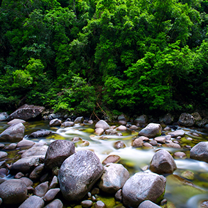 Exploring the Daintree Rainforest