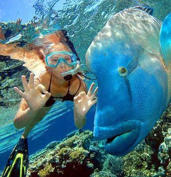 woman scuba diving great barrier reef big blue fish near Townsville